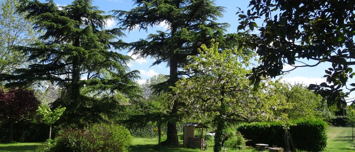 Permalien vers:Jardin cèdre