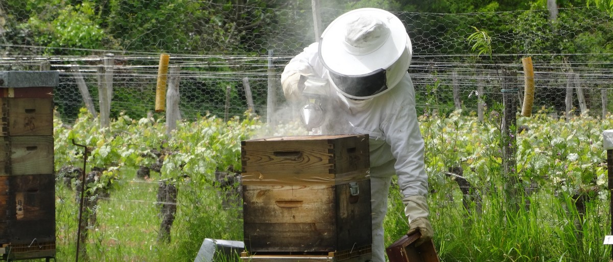 Permalien vers:Michel au rucher